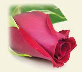 angel rosebeads